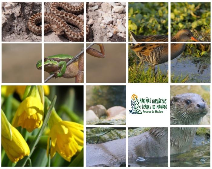 Ilustracion_biodiversidade_2